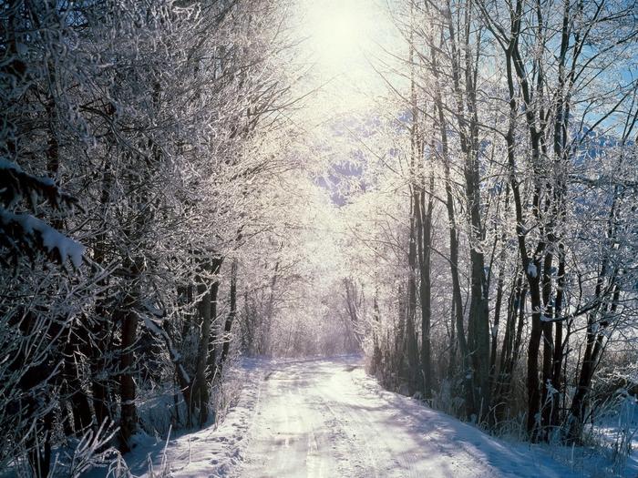 Image_0610.Bern.Snowy_Woods (700x525, 376Kb)