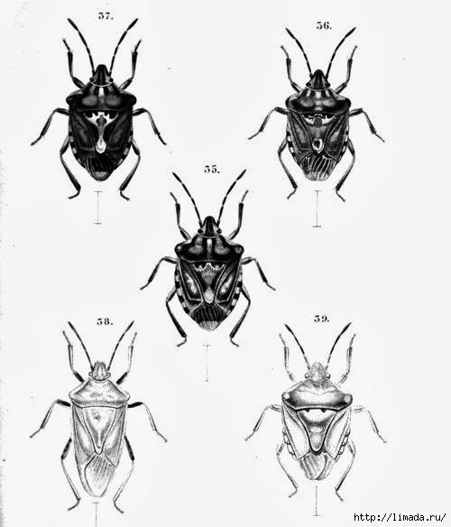 Bugs1_thumb3 (500x584, 100Kb)