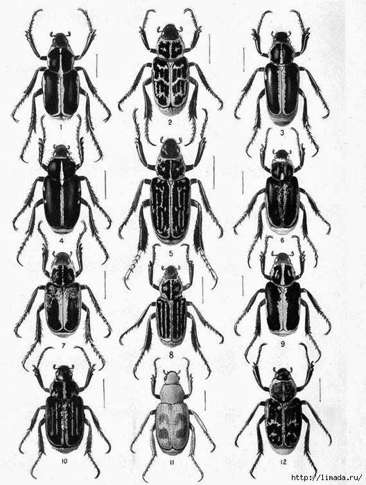 Bugs2_thumb3 (528x700, 256Kb)