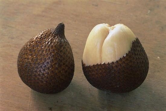 Салака (змеиный фрукт) (550x367, 102Kb)