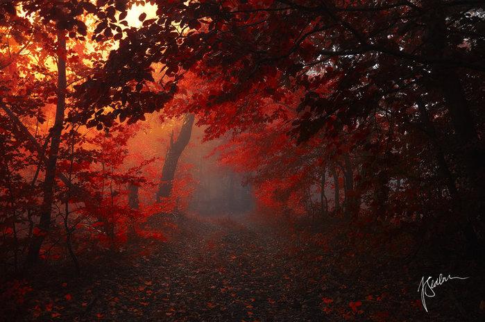 3166706__forest_in_my_heart__by_janek_sedlard60wkso (700x464, 114Kb)