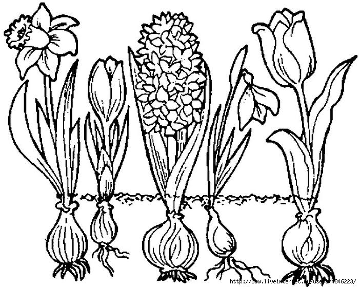 fruhlingsblumen (700x559, 288Kb)
