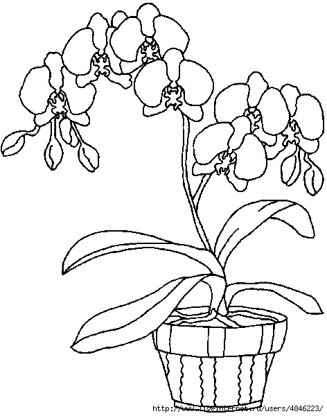 Orchideen (472x600, 140Kb)