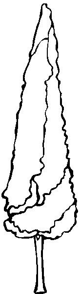 Pappel (164x600, 39Kb)