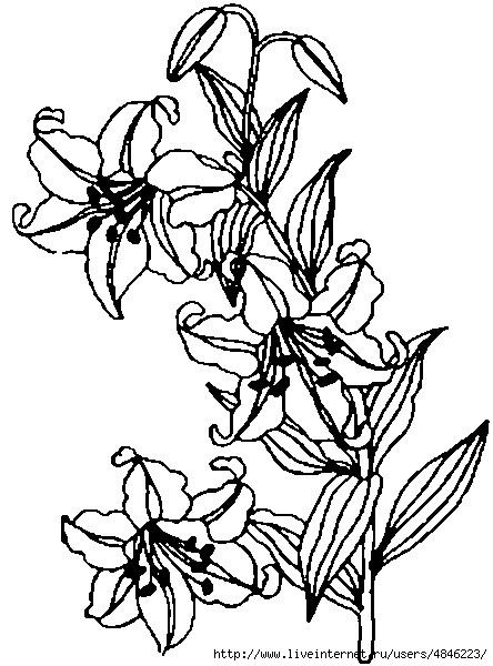 Tigerlilie (444x600, 175Kb)