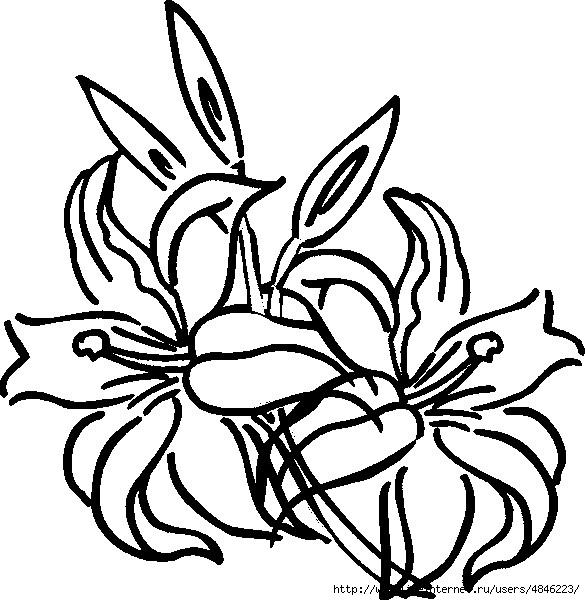 Лилия (585x600, 194Kb)
