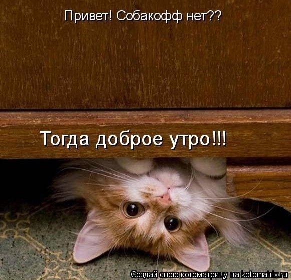 Утро кошка