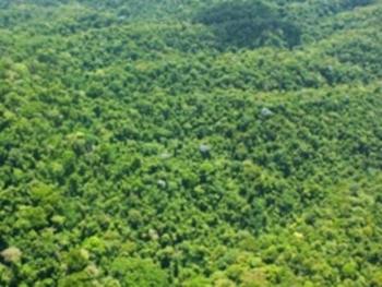 Город  золотка в джунглях (350x263, 83Kb)