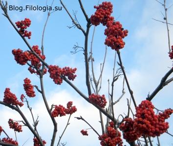 Красные гроздья рябины/3241858_rjabina1 (354x300, 85Kb)