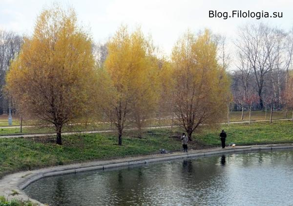 Городской водоем/3241858_priroda5 (600x421, 193Kb)