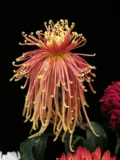 необыкновенной красоты цветы2 (480x640, 222Kb)
