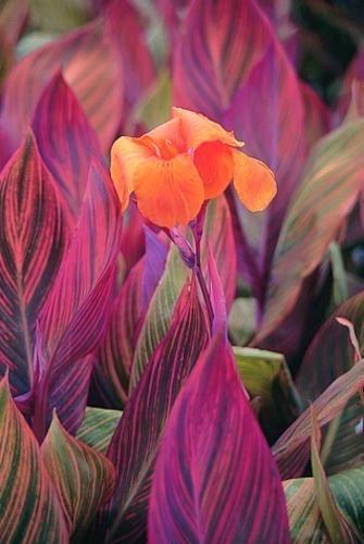 необыкновенной красоты цветы3тс (335x500, 88Kb)