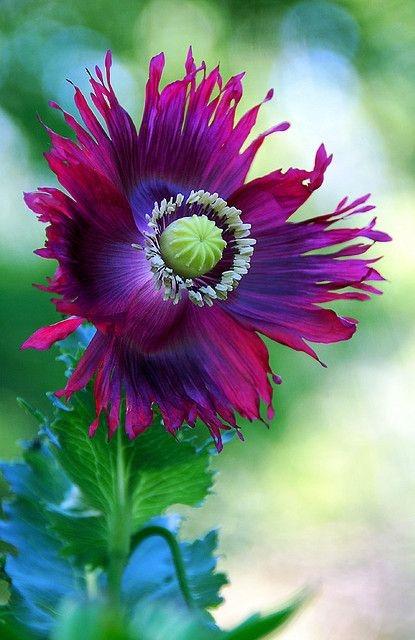 необыкновенной красоты цветы4а (415x640, 155Kb)
