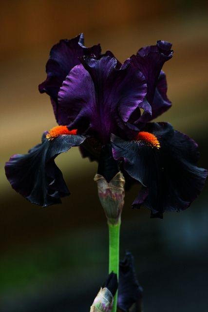 необыкновенной красоты цветы5а (427x640, 82Kb)