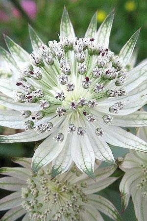 необыкновенной красоты цветы6а (300x450, 95Kb)