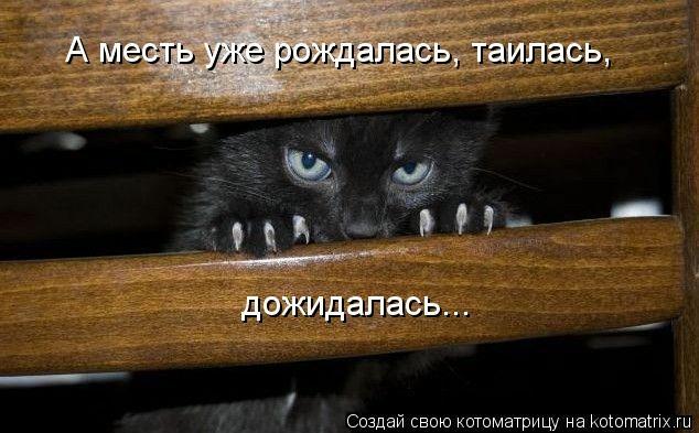 kotomatritsa_0 (634x393, 125Kb)