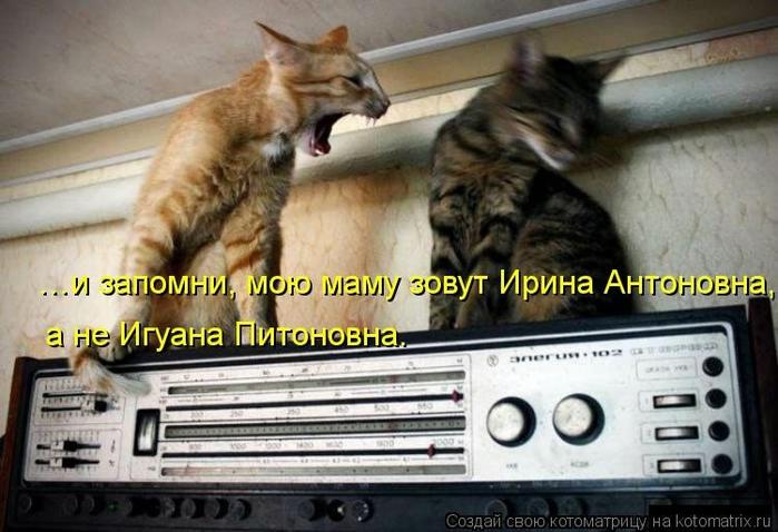 kotomatritsa_5 (700x478, 234Kb)