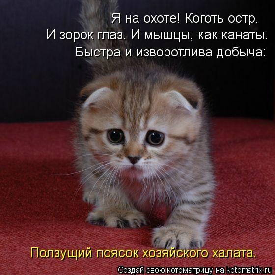 kotomatritsa_b1 (560x560, 135Kb)