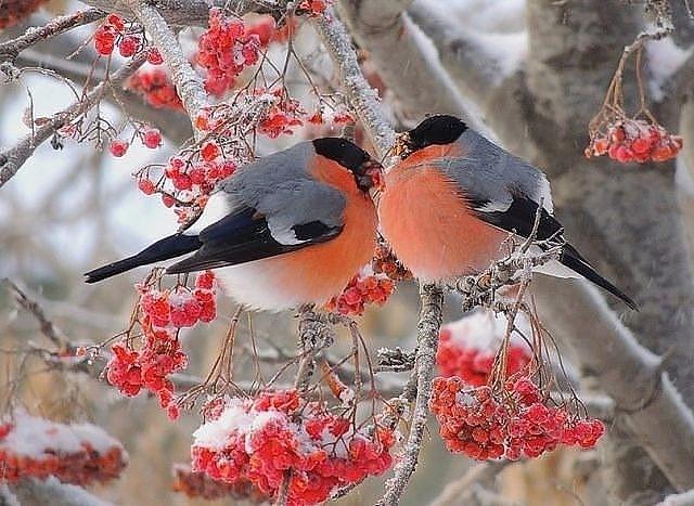 .... любовь и красота.... едины