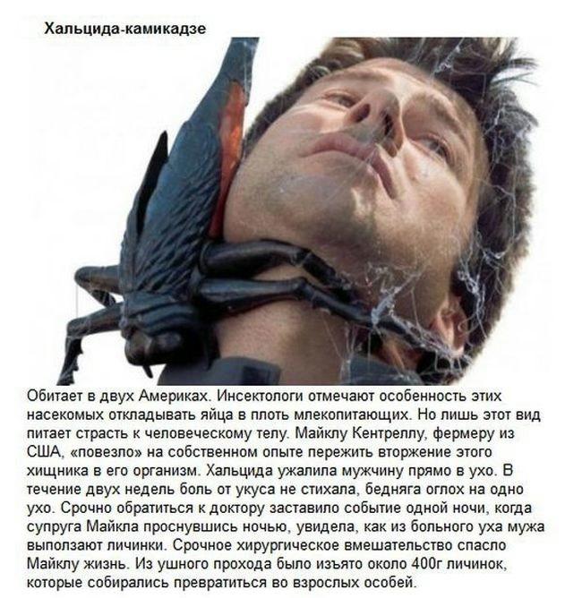 sozdaniy-otvratitelnyh-samyh-eto-interesno-poznavatelno-kartinki_8292538357 (650x668, 205Kb)