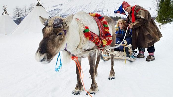 3578968_ReindeersledgeSunvilNorway1400Baard_Loken (700x393, 72Kb)