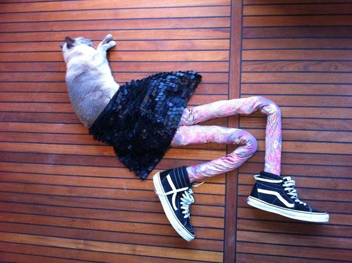 кошка в колготках фото 1 (700x523, 281Kb)
