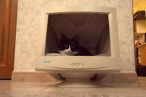 кот в мониторе (604x403, 52Kb)