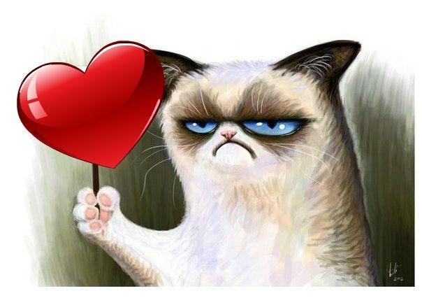 Картинка с недовольным котом