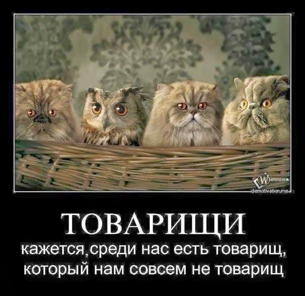 совы и коты юмор (604x587, 76Kb)