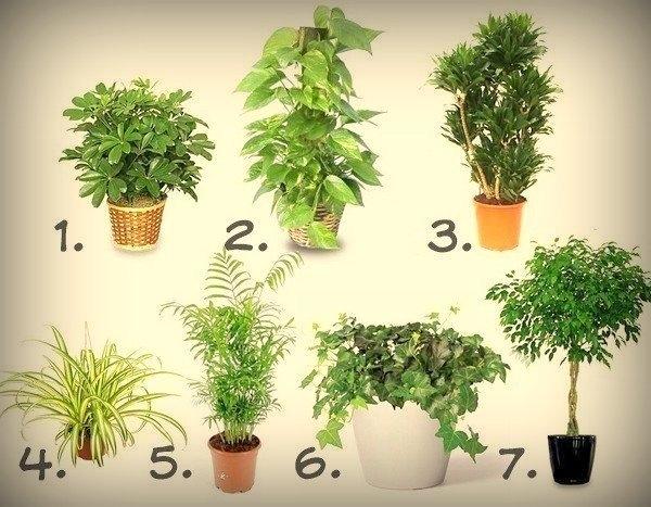 семь растений для очистки воздуха (600x467, 189Kb)