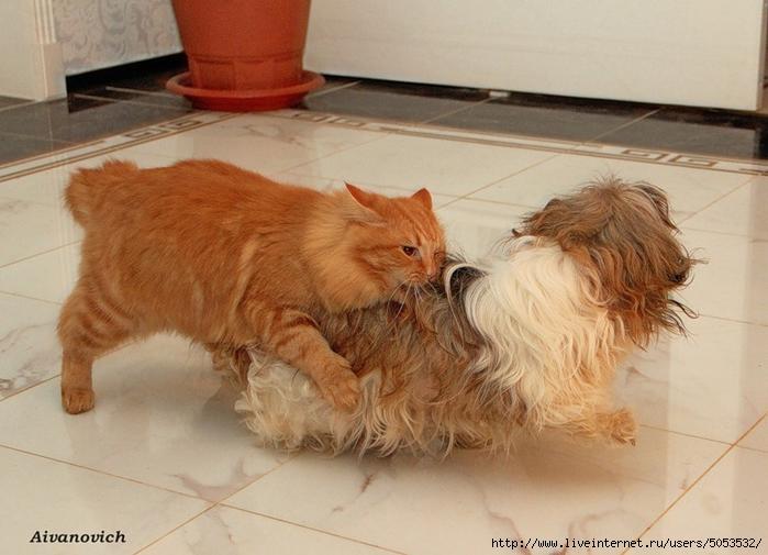 кошка с собакой (600x505, 245Kb)