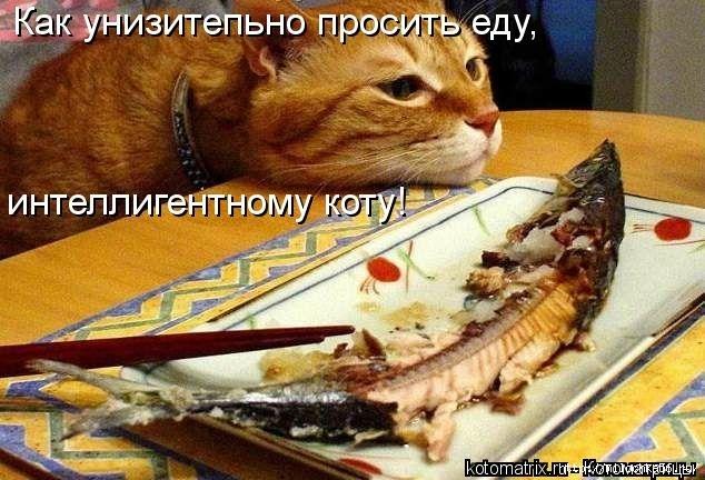 1382543464_106343332_large_kotomatritsa_1w (634x432, 193Kb)