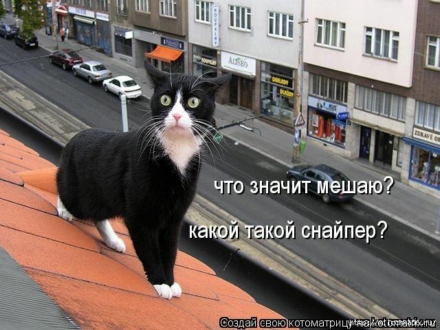 1382543474_106343333_large_kotomatritsa_2b (640x480, 188Kb)