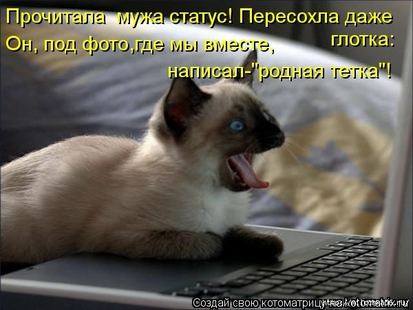1382543485_106343338_large_kotomatritsa_gs (600x450, 137Kb)