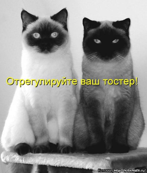 1382543500_kotomatritsa_uy (591x700, 189Kb)