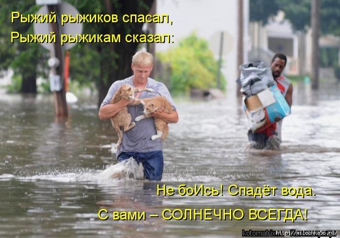 1382543512_kotomatritsa_tw (700x490, 254Kb)