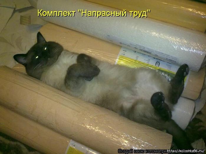 1382543517_106343340_large_kotomatritsa_o (700x524, 229Kb)