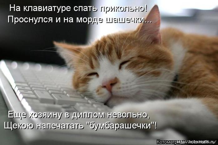 1382543523_kotomatritsa_qe (700x466, 195Kb)