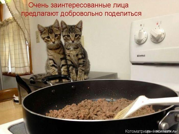 1382543529_106343343_large_kotomatritsa_oo (700x525, 164Kb)