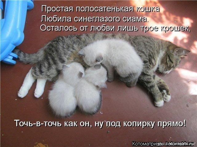 1382543549_106343336_large_kotomatritsa_7r (640x480, 185Kb)