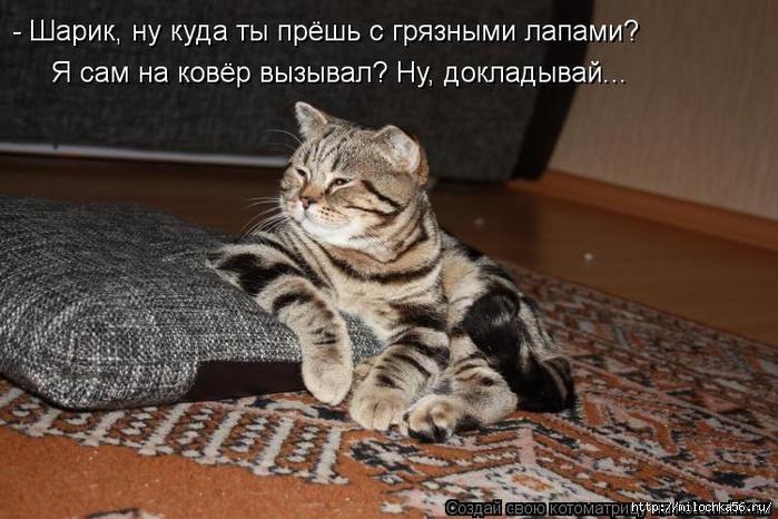 1382543554_kotomatritsa_st (700x466, 253Kb)