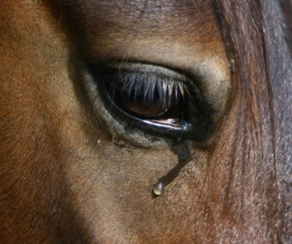 Саша Савельева задумалась о грустных глазах лошадей