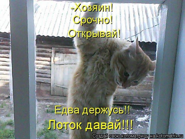 kotomatritsa_1w (640x480, 170Kb)