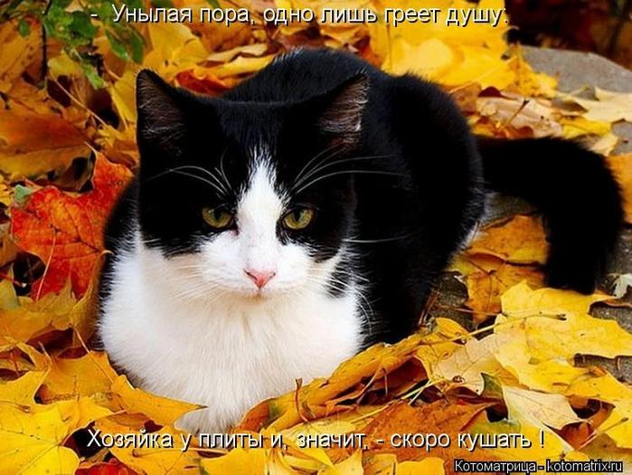 kotomatritsa_iR (700x525, 283Kb)