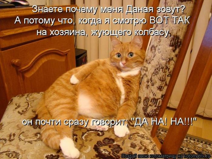 kotomatritsa_iy (700x524, 302Kb)