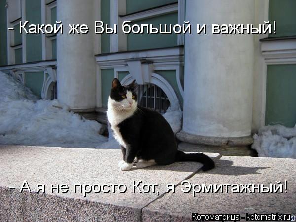 kotomatritsa_TQ (600x450, 125Kb)