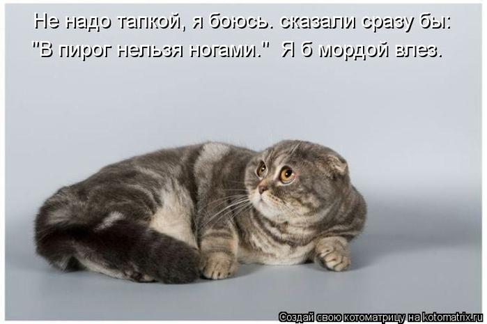 kotomatritsa_wn (700x465, 141Kb)