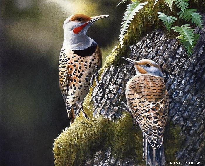 Щебечут птицы