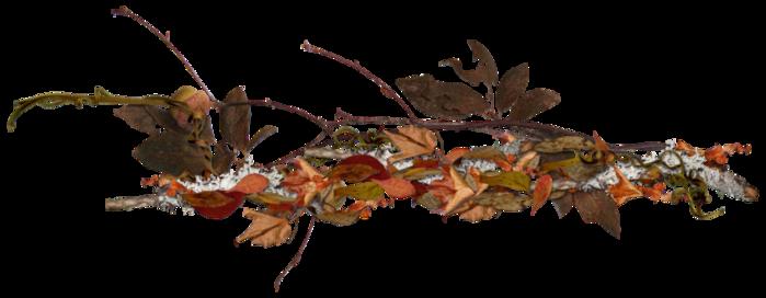 92326704_Carena_Autumn_Crunch_Cluster_4 (699x272, 163Kb)