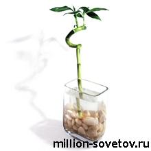 bamboo1 (220x220, 30Kb)
